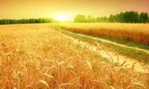 Когда волнуется желтеющая нива… (анализ стихотворения Лермонтова)