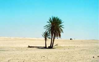 «Три пальмы» — стихи Лермонтова